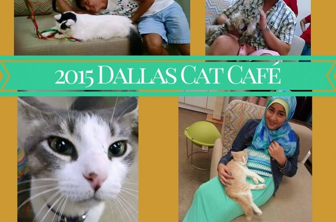 2015 Dallas Cat Café
