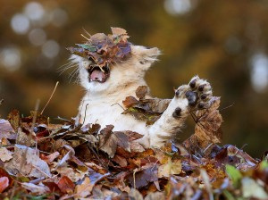 How the Cat Connection feels about Fall.