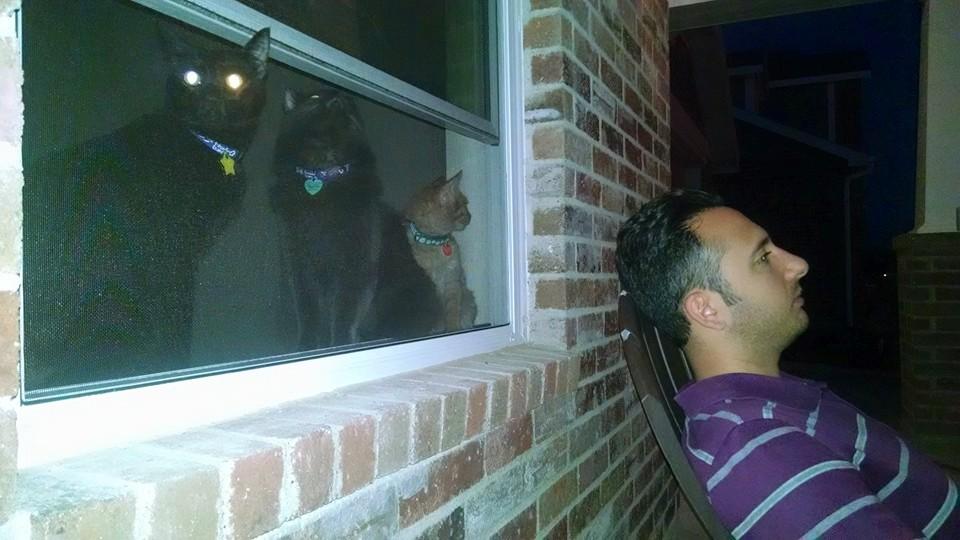 Cat Won T Stop Scratching Door At Night