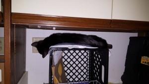 kitten hiding2