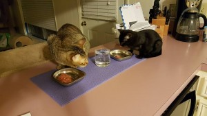 Tucker & Muffin sharing some dinner time company