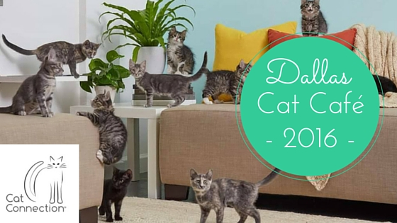 Dallas Cat Café
