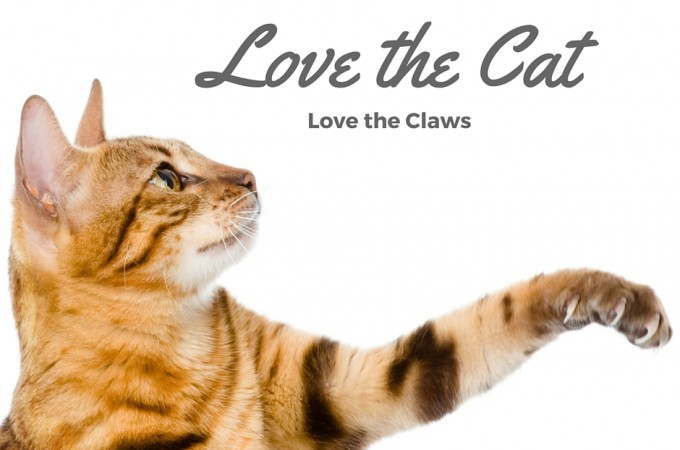 Love the Cat, Love the Claws