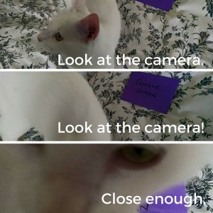 Feline photo session fail