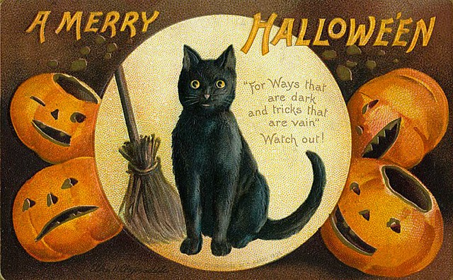 Why Cats are Associated with Halloween