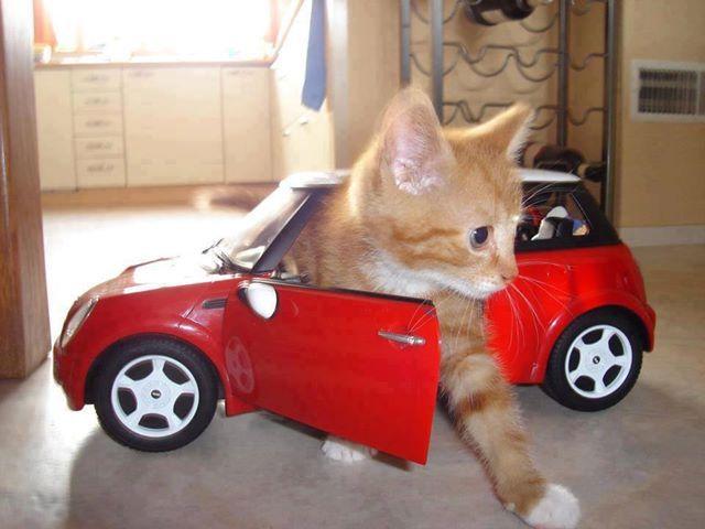 Cat Travel Car Litter