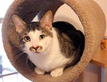 Rocky the FIV cat